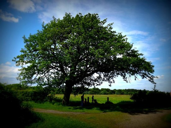 Speke Hall: The perfect snooze tree
