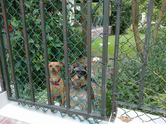 Somerset Lodge: The friendly and cutest doggies