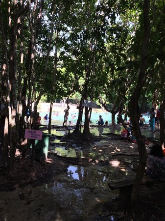 Emerald Pool (Sa Morakot) : Bomen met zwemwater