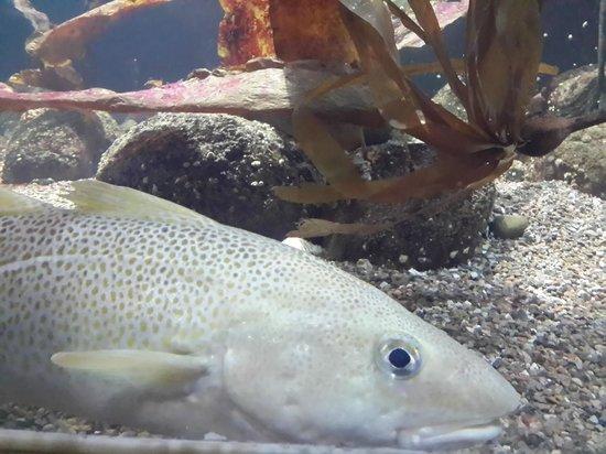 Aquarium Kiel: Рыба