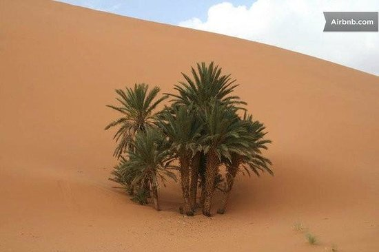Desert Berber Fire-Camp: Camp oasis