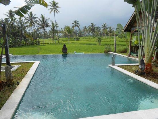 Hati Padi Cottages: vue piscine / rizière
