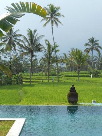 Hati Padi Cottages: autour de tanah cinta village