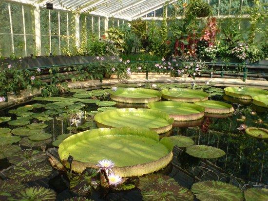Royal Botanic Gardens, Kew: In De Overdekte Tuin
