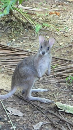 Boutique Bungalows: baby wallabie our hosts care for