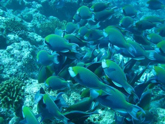 Vilamendhoo Island Resort & Spa: Snorkelling