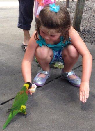Tampa's Lowry Park Zoo: Feeding the birds!