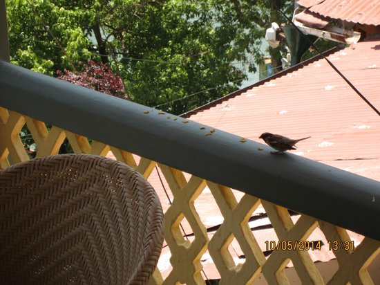 Grand Hotel: sparrow having lunch