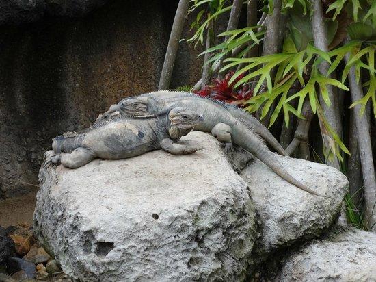 Australia Zoo: Snooze Time