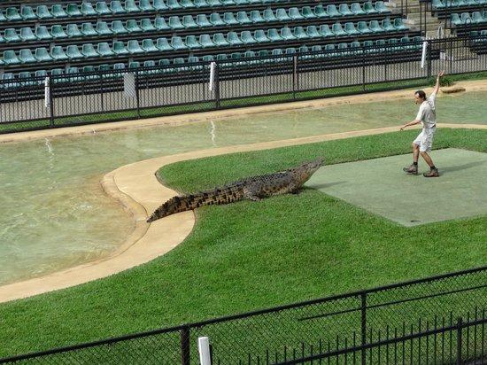 Australia Zoo: Croc Show