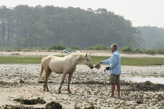 Chincoteague Cruises & Nature Tours : Assateague wild pony inspecting Capn Charlie