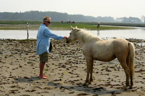 "Chincoteague Cruises & Nature Tours: Assateague wild pony 'inspecting"" Charlie"