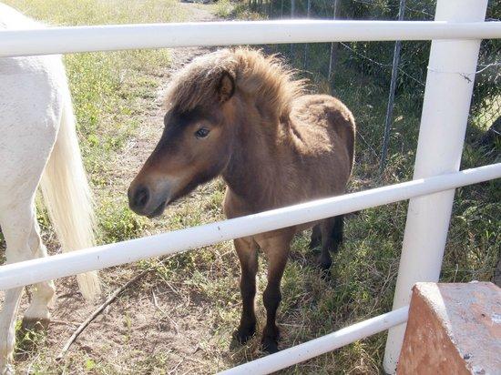 Bed & Breakfast Monteruiu: Pferde