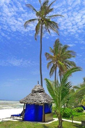 The Palms : Palms Banda