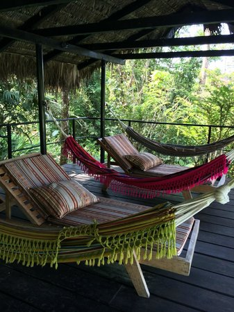 Hamadryade Lodge: au bord de la piscine