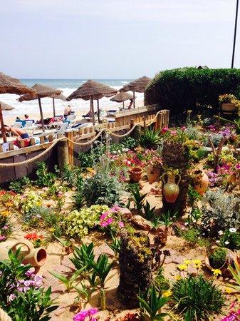 Tui Magic Life Africana : Beach Bar View