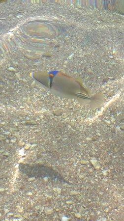 Domina Coral Bay Sultan : вот такая рыбка прямо под ногами