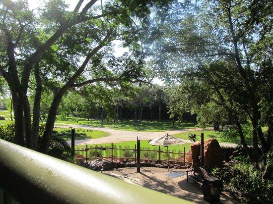Disney's Animal Kingdom Lodge: Our view