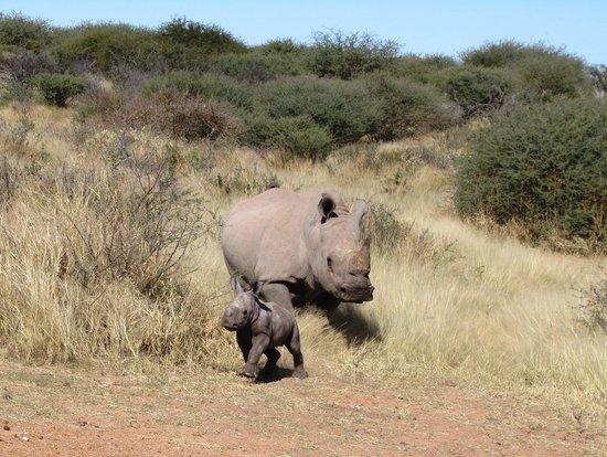 Okambara Elephant Lodge: Nashon mit junges