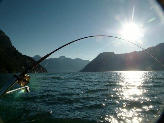 Island Sportfishing Adventures: Campbell River chinook fishing