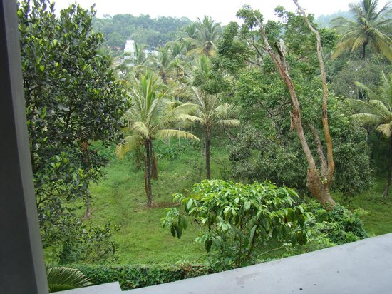ABAD Green Forest Resort : View from room