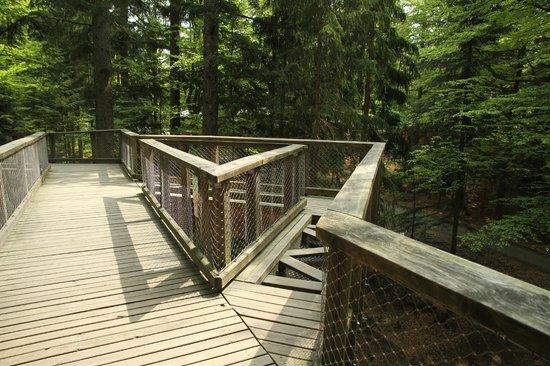Baumwipfelpfad: Tree Top Walk
