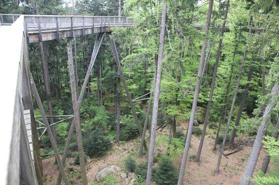 Baumwipfelpfad Bayerischer Wald: Tree Top Walk