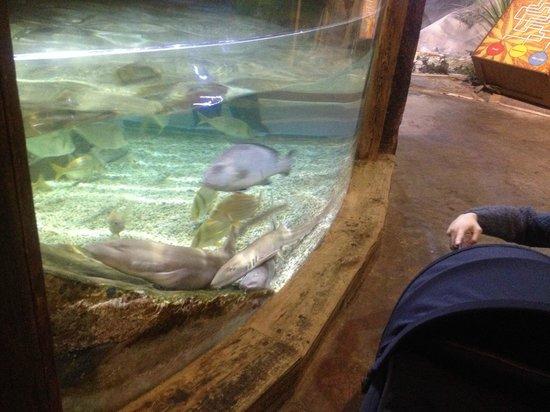 National Sea Life Centre: Sharks
