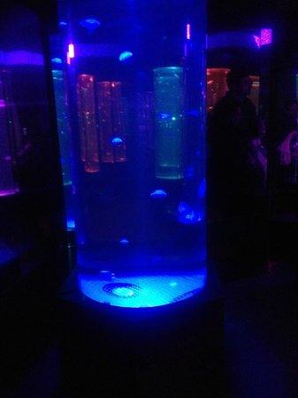 National Sea Life Centre: Jelly Fish