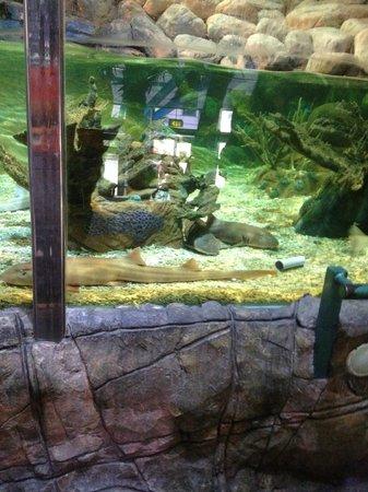 National Sea Life Centre: Shark