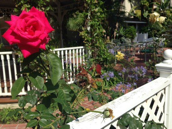Town and Country Resort & Convention Center: Beautiful rose gardens