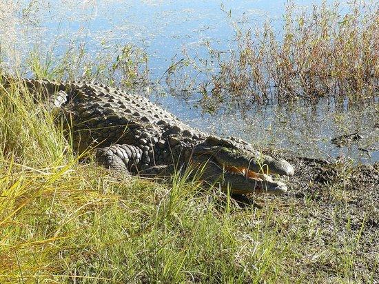Leopard Lodge: Krokodil