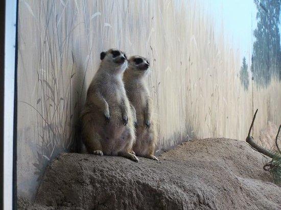 Woodland Park Zoo: Posing!