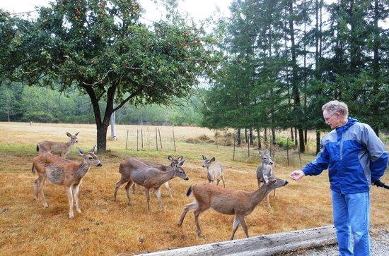 Powder Creek Ranch Bed & Breakfast : Whatcha got to eat?