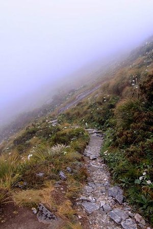Milford Track: On the way up to MacKinnon pass.