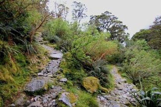 Milford Track: The switchback portion of the trail on the way up.