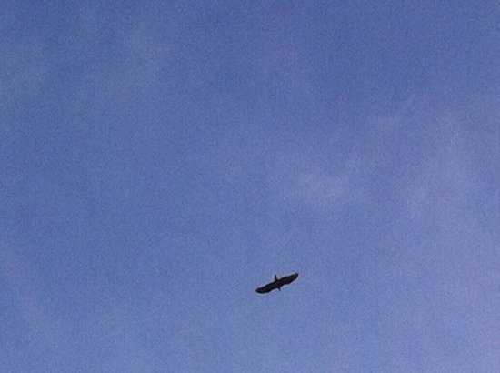 The House on the Hill: The Bald Eagle that flew over us while canoeing on the lake.