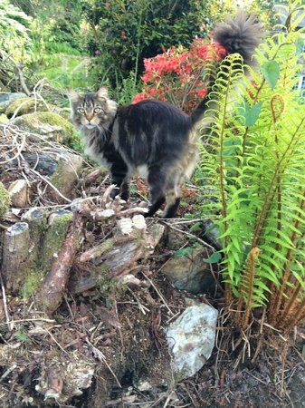 Sygun Fawr Country House: Owners friendly cat