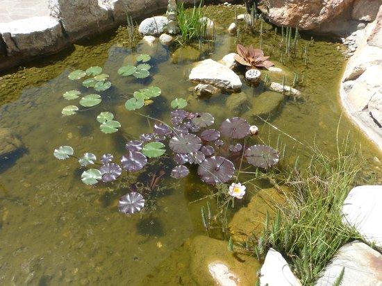 Blumenhotel Belsoggiorno : Teich mit Goldfischen