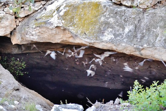 Brackettville, Техас: bat colony leaving cave