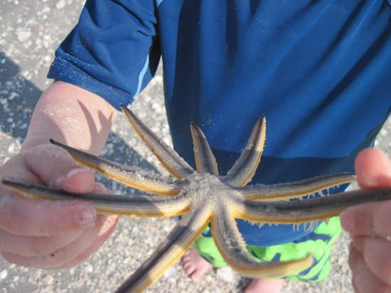 """Jensen's """"On the Gulf"""": starfish  caught by this boy's father"""