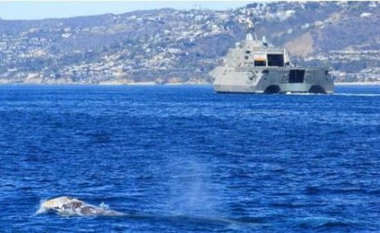 Dana Point, CA: Gray Whale & Littoral Combat Ship (LCS)