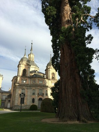 Parador de Turismo de La Granja: Palace & Tree