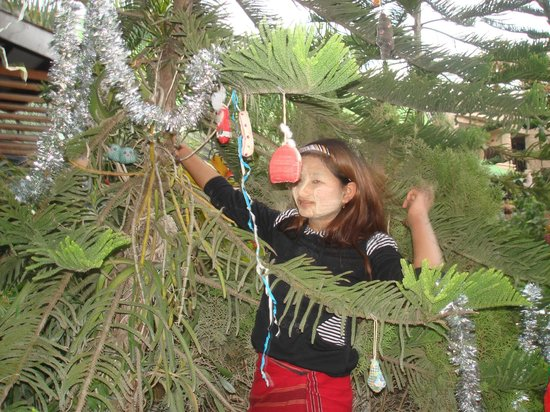 Aquarius Inn: The sweet girls from the staff decorating a tree outside into a christmas tree