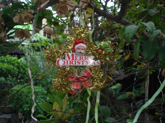 """Aquarius Inn: The """"christmas tree"""" is ready"""