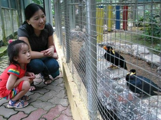 Labuan Bird Park: Have a chat with the Hill Mynah birds.