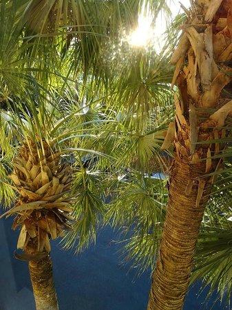 La Quinta Inn & Suites Miami Cutler Bay: direkt vorm Fenster erheben sich wunderbare Palmen!