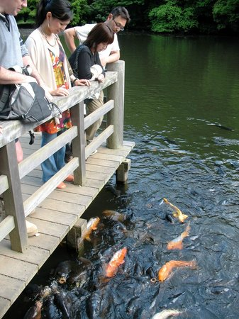 Meiji Jingu Shrine: В парке Мэёдзи-дзингу гъёэн (пруд Нан-Ти икэ)