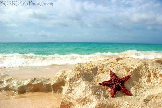 Sapphire Beach Club Resort: View in Baie Rouge.... AMAZING beach.