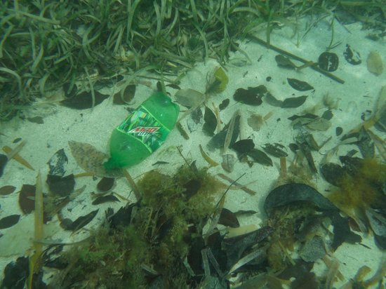 Grand Palladium Jamaica Resort & Spa: Even trash in the water
